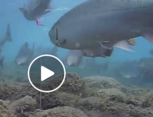 Fishing Videos From Alaska's Egegik River