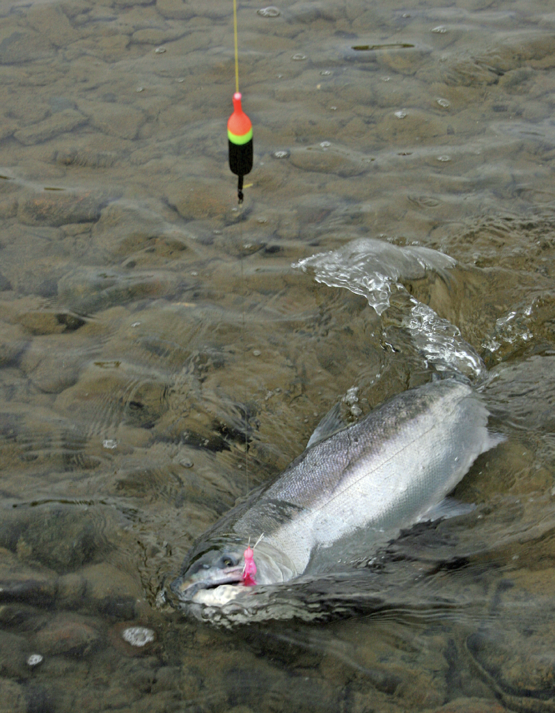 Bobber jig fishing for silver salmon becharof lodge for Salmon fishing tackle setup